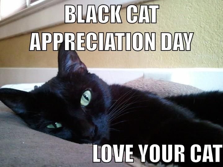 Happy National Black Cat Day From My Goofy Little Seamus D Amber Rustcraft Black Cat Appreciation Day Black Cats Rock National Black Cat Day