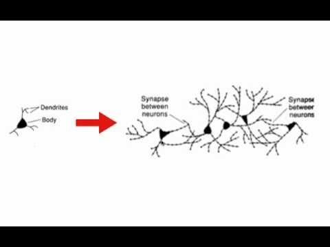 Brain-based Learning Model (Neuroplasticity) This video