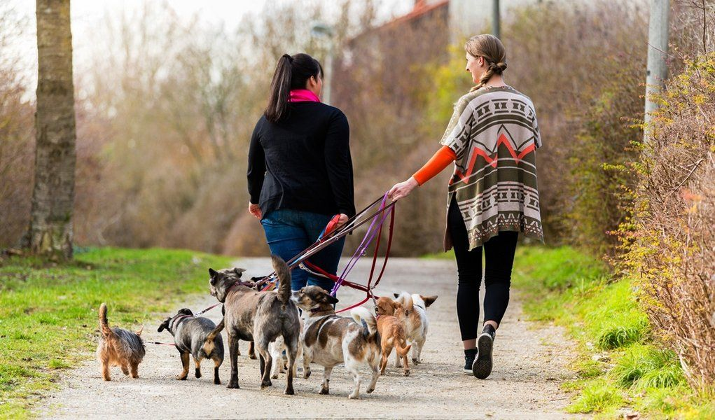 Ask a dog walker how much do dog walkers get paid