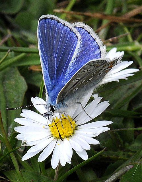 ...Mas a sua alegria apagava-se dia-a-dia, e cobria-se de poeira, como a asa de uma borboleta que um alfinete atravessou. (Victor Hugo)