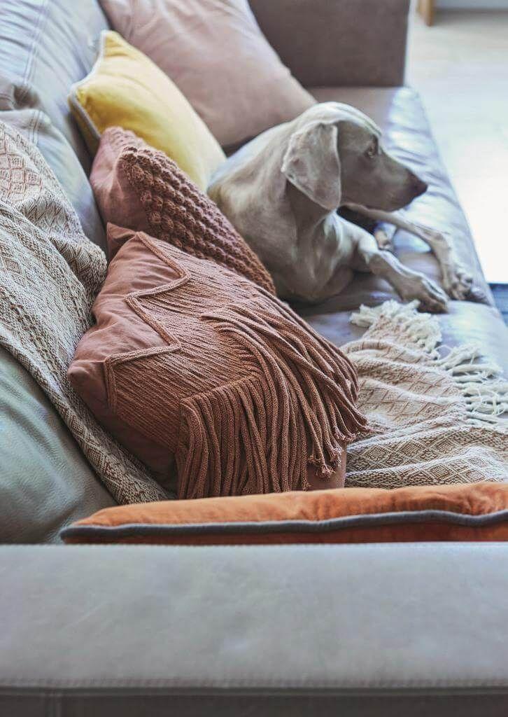 Sofa Sex Unter Decke