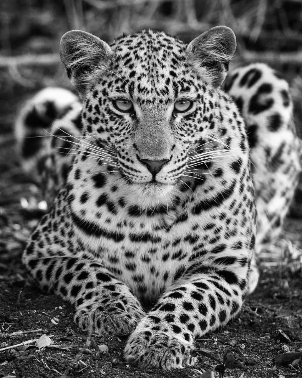 Cool Black And White Animal Photos