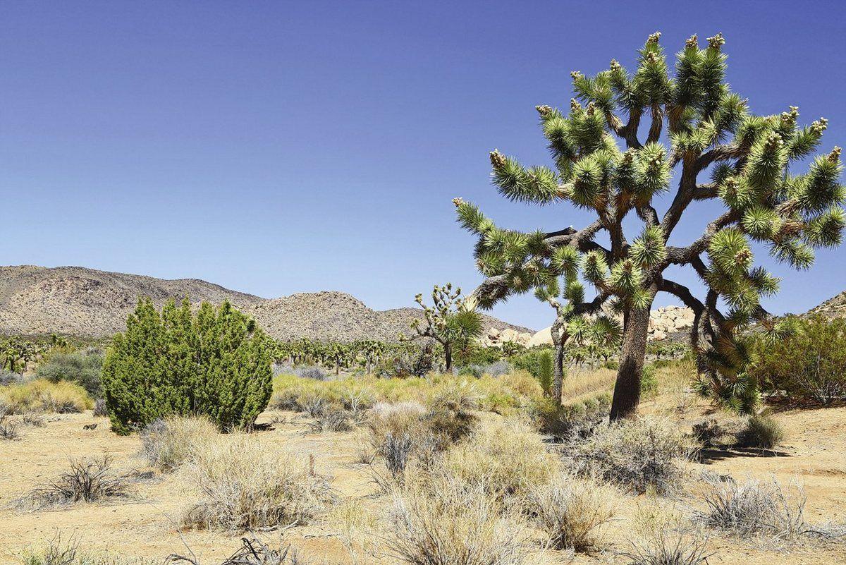 Photo of Artland Wandfolie »fotoping: Joshua Baum in der Mojave Wüste« on-line kaufen | OTTO