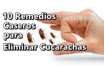 Como Acabar Con La Plaga De Cucarachas Chiquitas 10 Remedios Caseros Para Eliminar Cucarachas Remedios Para