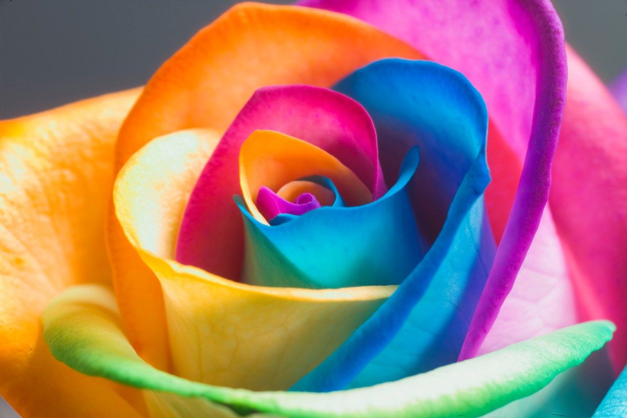 I Wish Flowers Really Bloomed Like This Rainbow 3 Pinterest