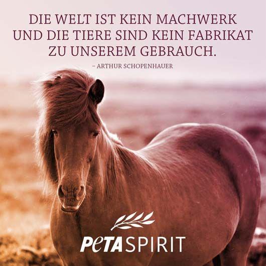 PETA Spirit Zitat von Arthur Schopenhauer #veganquotes