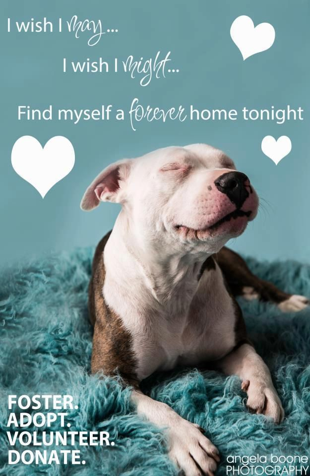 I Wish I May I Wish I Might Find Myself A Forever Home Tonight