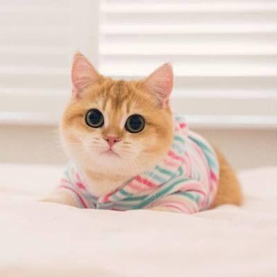 Look these beautiful eyes #cat #cats #catsofinstagram #of #catstagram #instagram #instacat #catlover #catlovers #kitten #kitty #meow #pet #cute #dog #love #catoftheday #catlife #pets #gato #kittens #animals #world #cutecat #animal #catlove #gatos #adoptdontshop #art #bhfyp