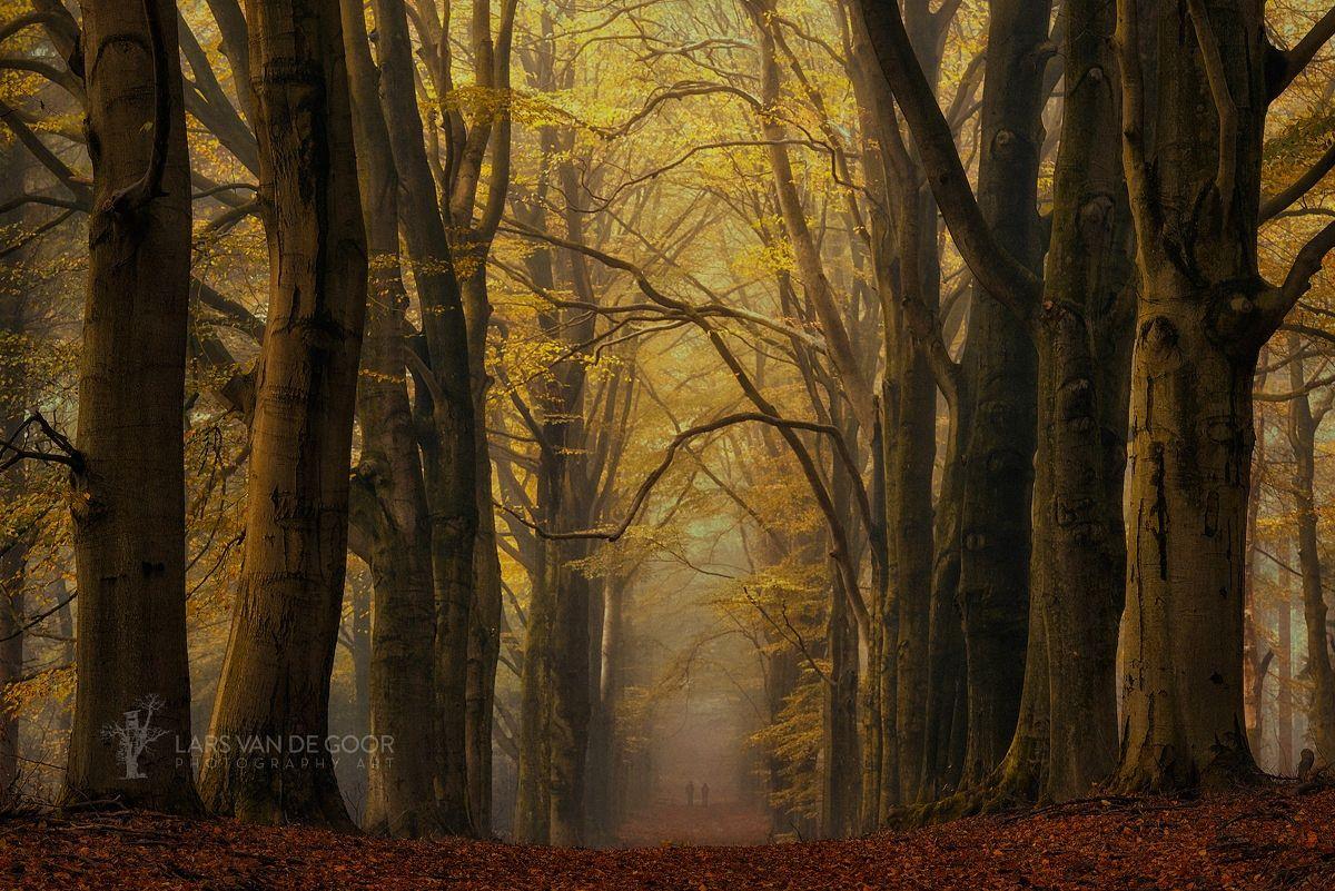 Golden Fall by Lars van de Goor on 500px