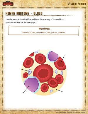 Human Anatomy – Blood - Printable Sixth Grade Science