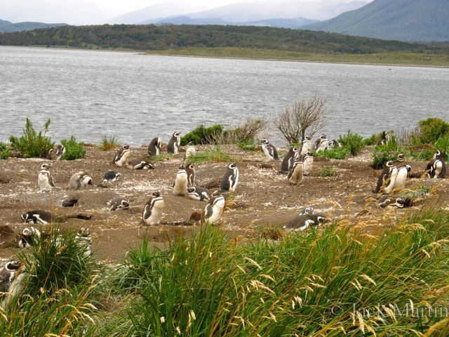 Argentina Canoe Hike And Take A Beagle Channel Cruise In Ushuaia