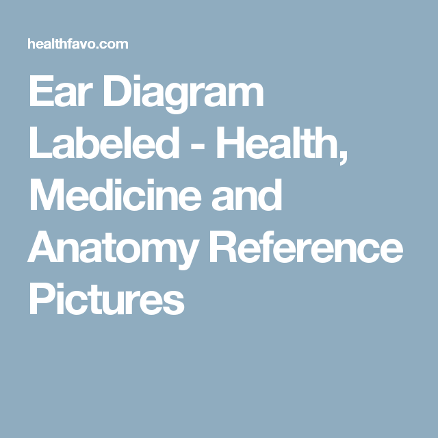 Ear Diagram Labeled Health Medicine And Anatomy Reference