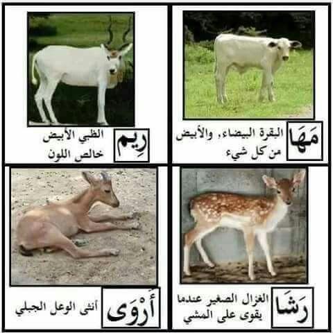 Pin On لغتنا العربية الجميلة