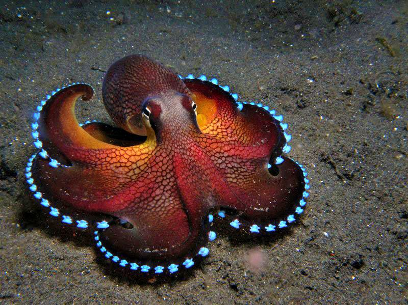 Colorful octopus adorable animals pinterest animal for Colorful octopus painting