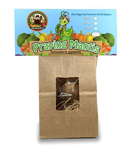 Beneficial Pest Control Insects Praying Mantis Egg Case 2 Extra