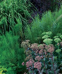 Be Bold With Fine Textured Plants Plants Fine Gardening