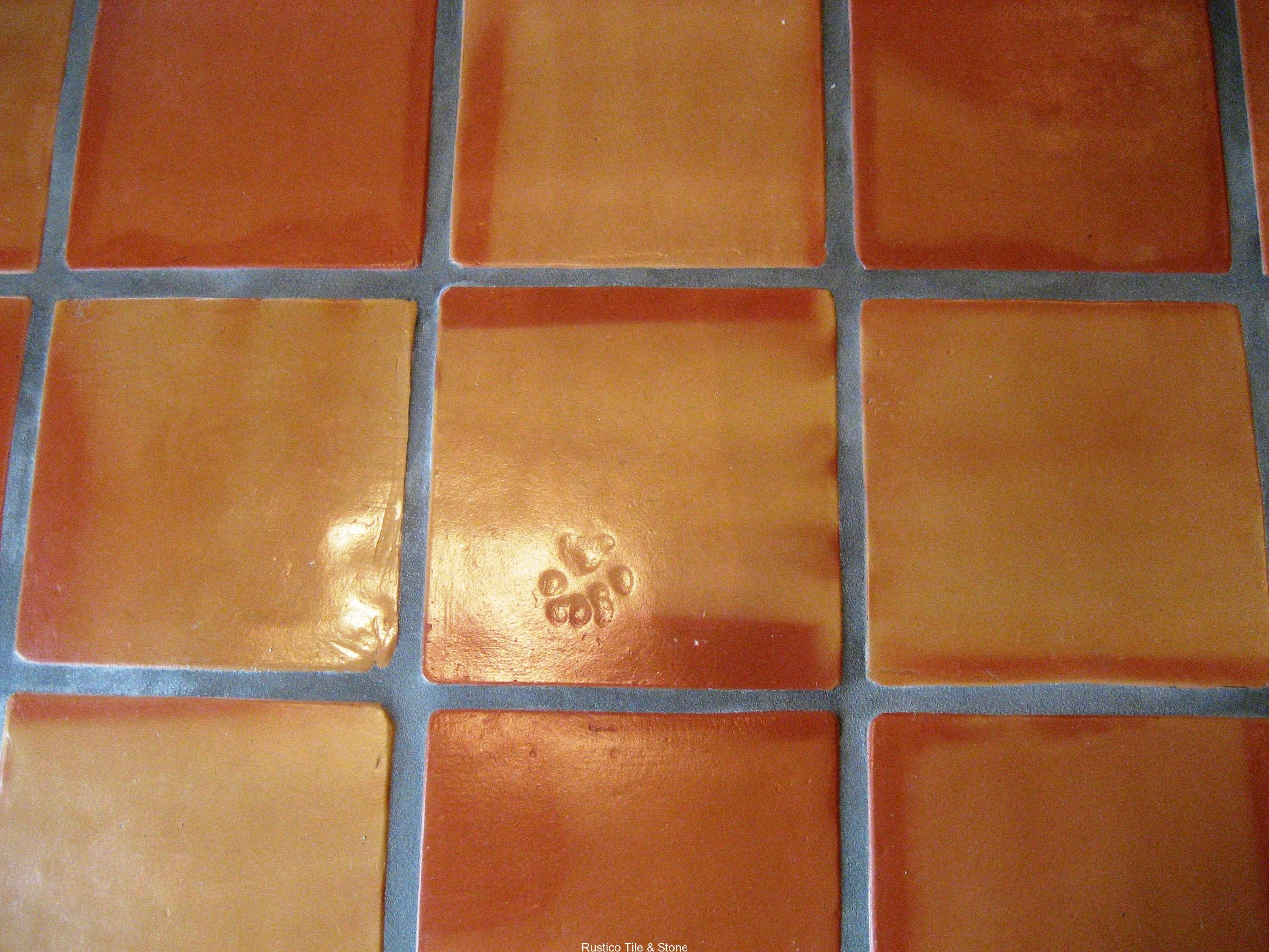 Paw Print Shown On A Square Clay Tile Floor Pinterest