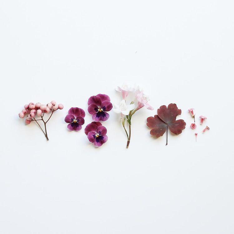Wedding Flowers Tumblr: Gardening: Flower And Vegetables