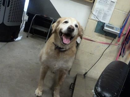Adopt Jackson A Lovely 8 Years Dog Available For Adoption At