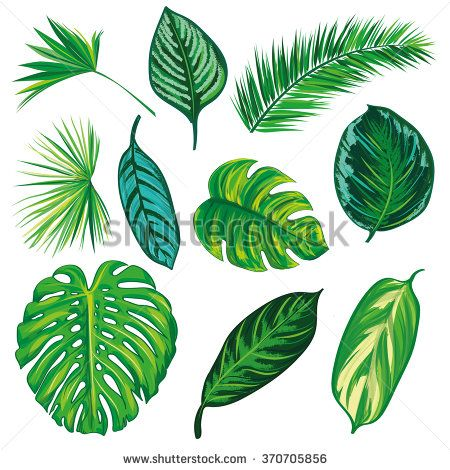 Tropical Leaves Collection On Isolate Vector Beautiful Set Vector Illustration Eps 10