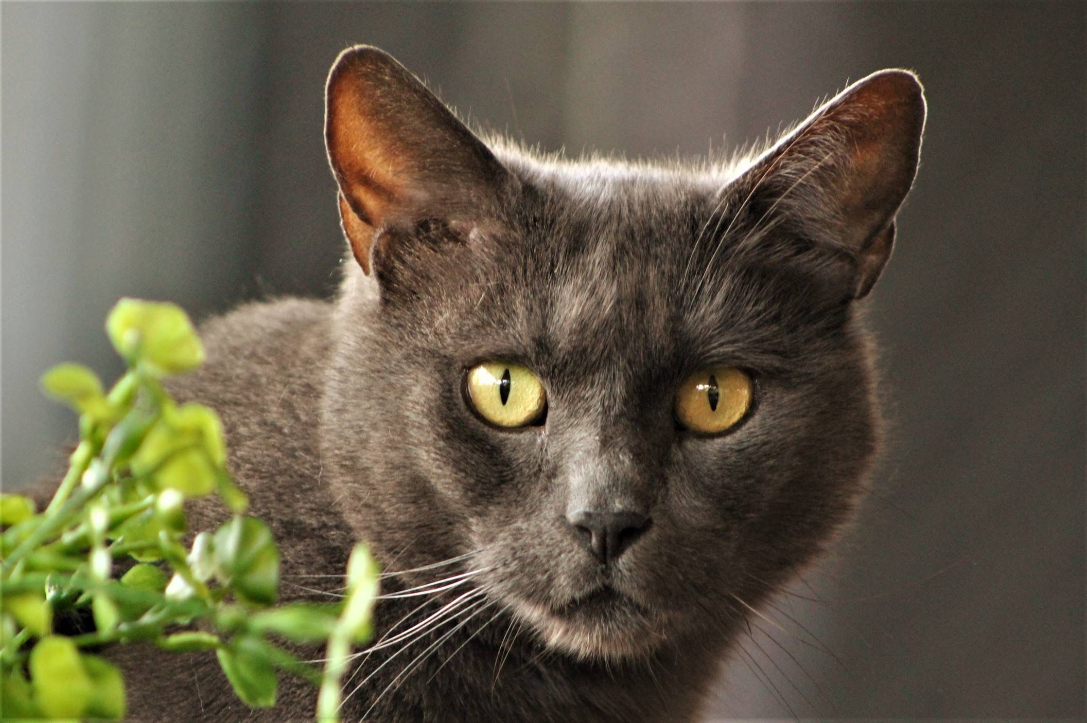 Pin by Cindy Kinsey on Photography in 2020 Grey cats