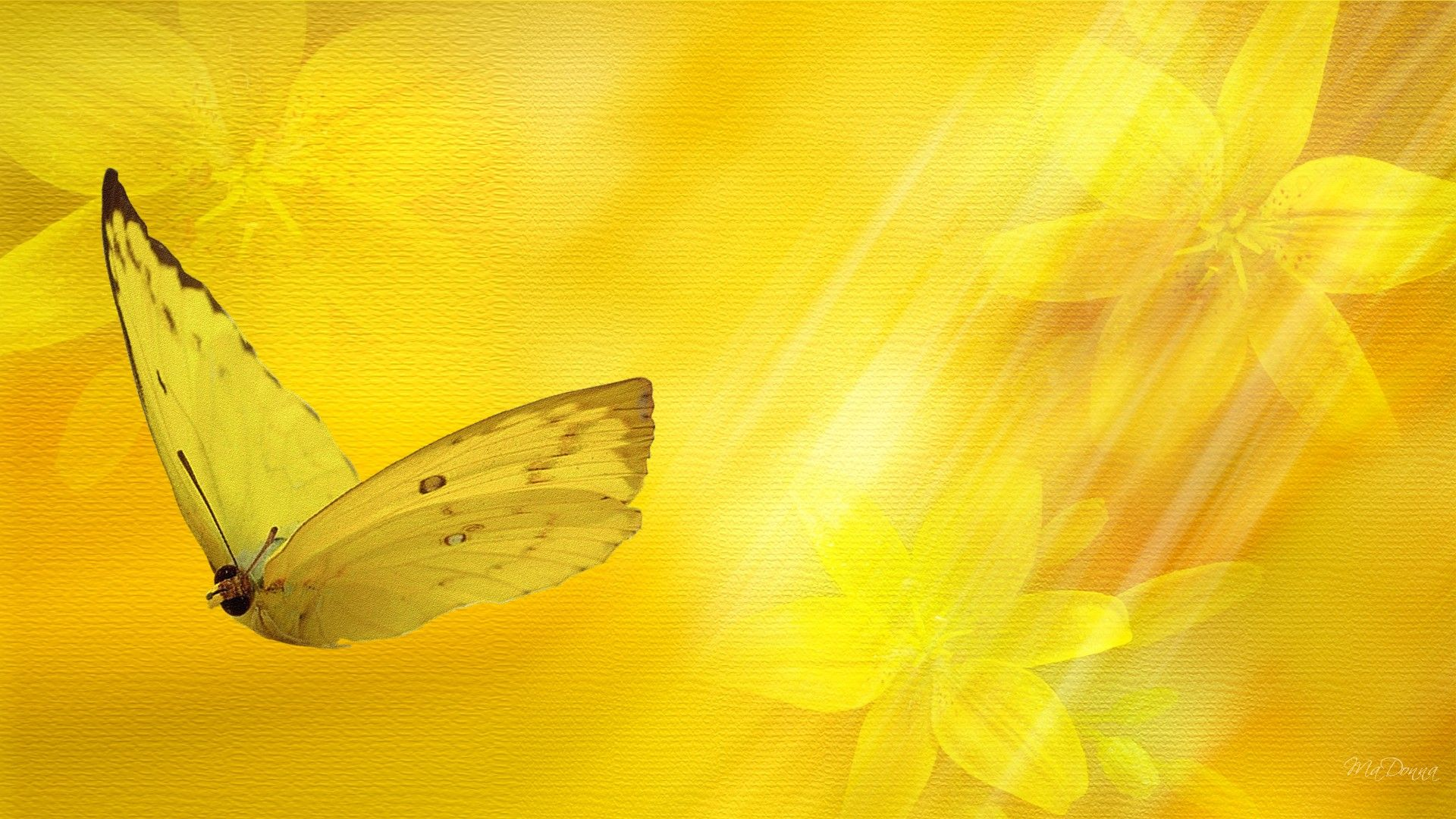 Butter Yellow Floral Wallpaper Butterfly