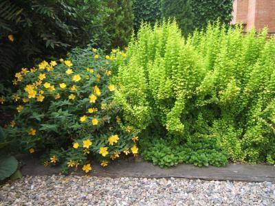 Cómo elegir arbustos para tu jardín Mi Jardín Pinterest Low