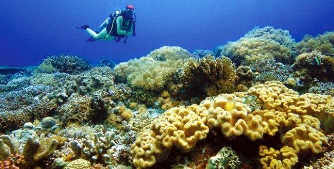 Dive on Tubbataha Reef