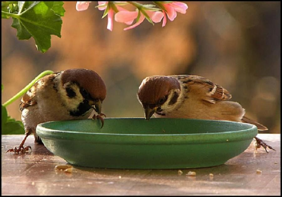 Hungry sparrows....