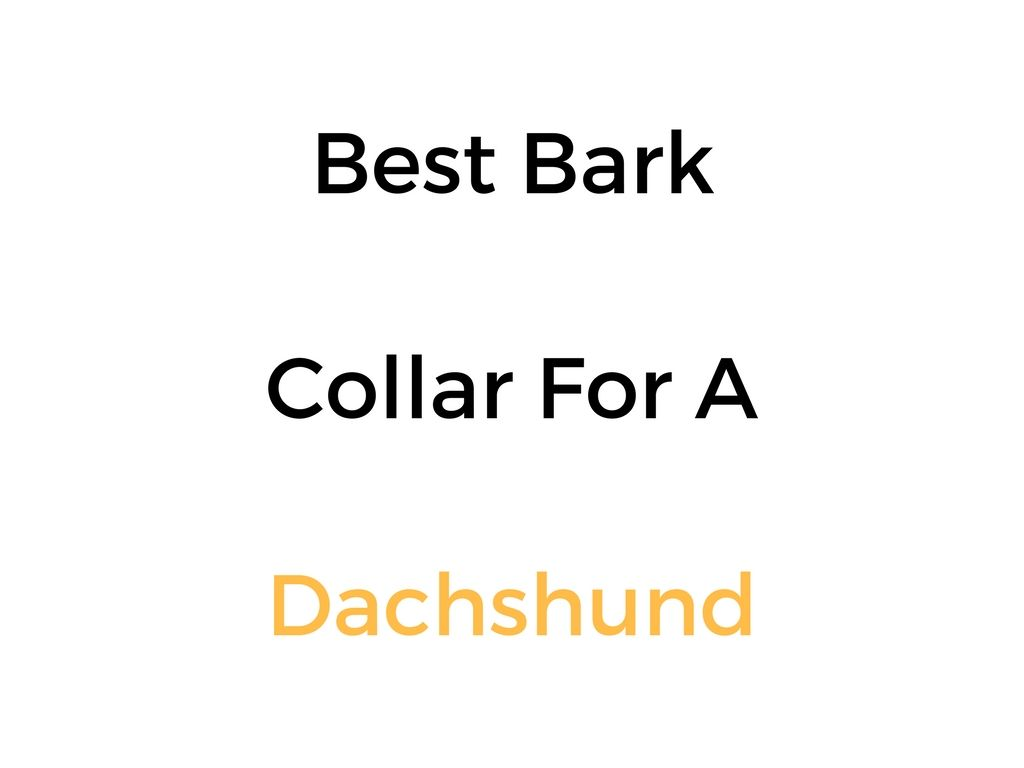 Best Bark Collar For A Dachshund Reviews Amp Buyer S Guide