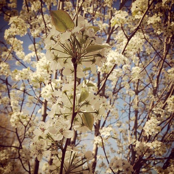 << spring blooms >>