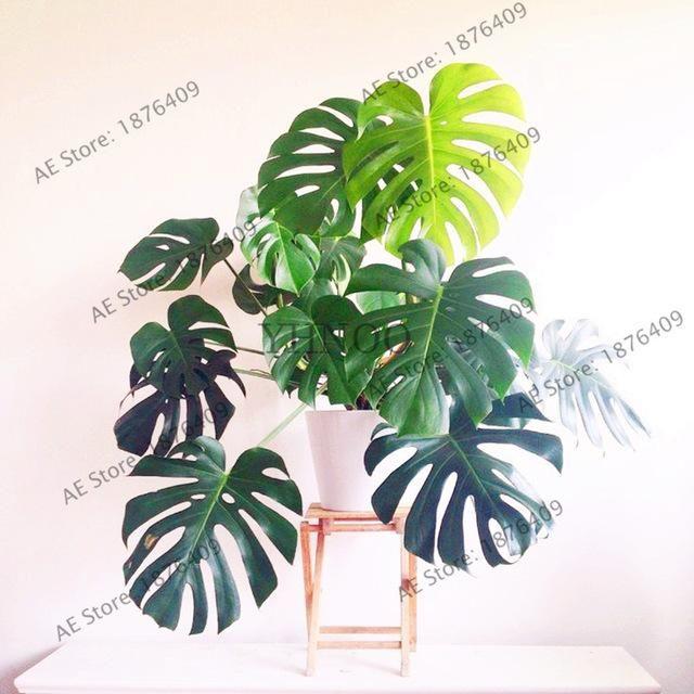 105 Pcs/bag Bottle Palm Tree Turtle Seeds Exotic Plants