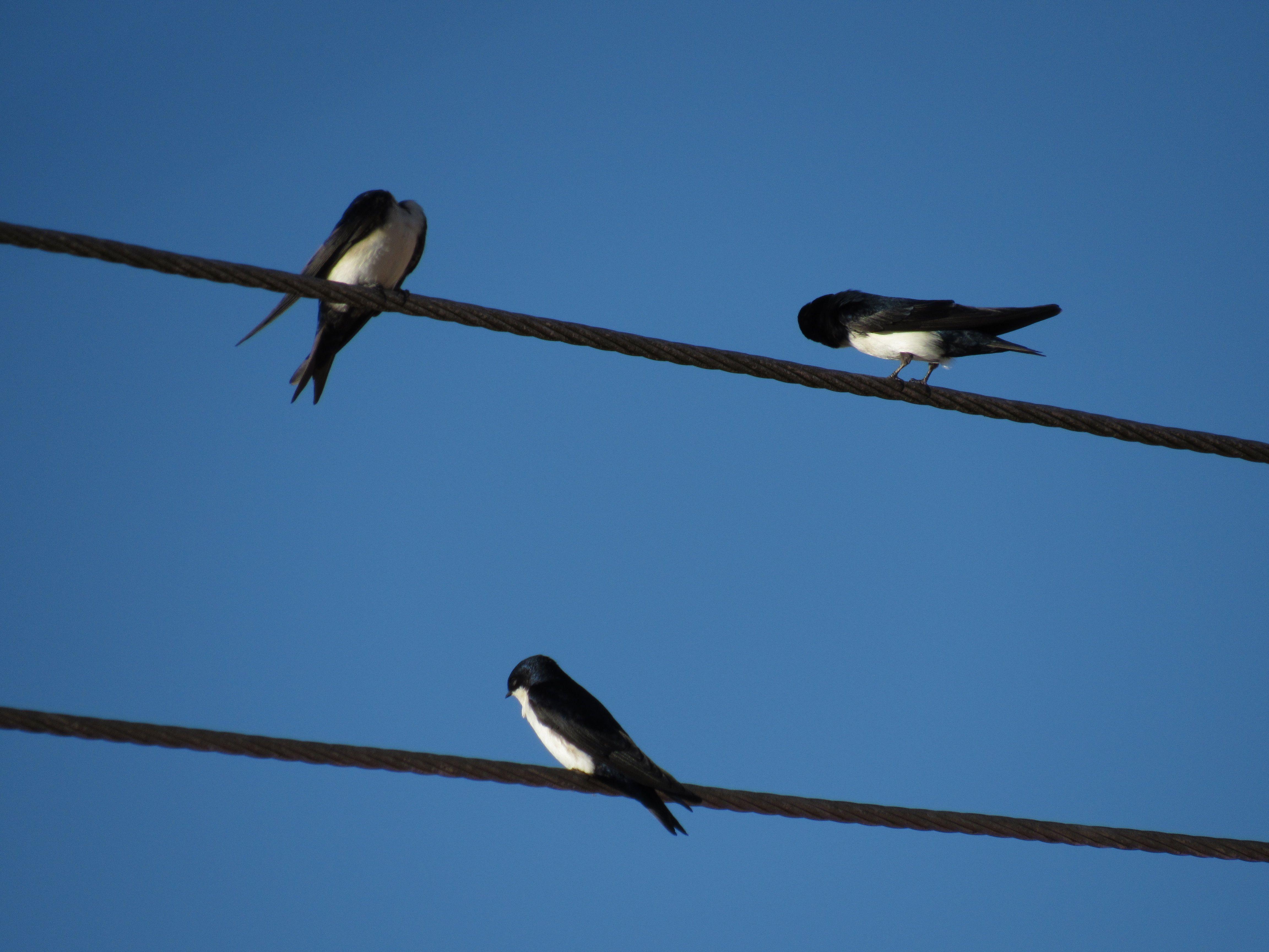 Perdi a cabeça. O ângulo em que fotografei pareceu que uma dessas aves estava sem cabeça. Experiências locais