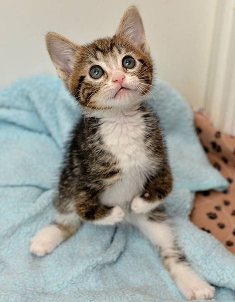 She Was Born Disabled But When You See This You Ll Understand Why It S So Special Cats And Kittens Kittens Cutest Cute Cats And Kittens