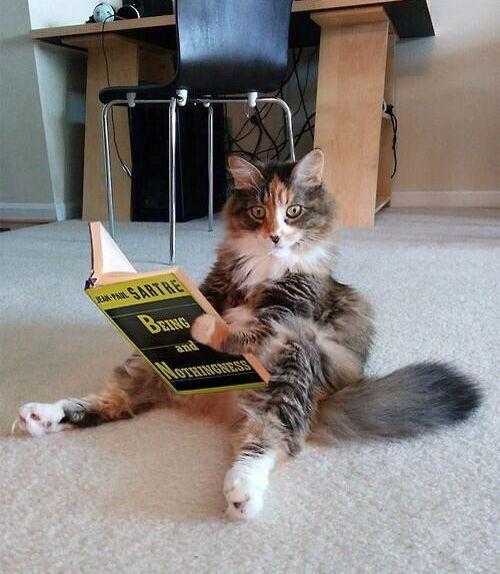 Philosophical cat.