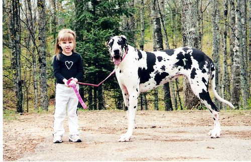 Blue Fawn Harlequin Great Dane Great Dane Dogs Dog Life Best
