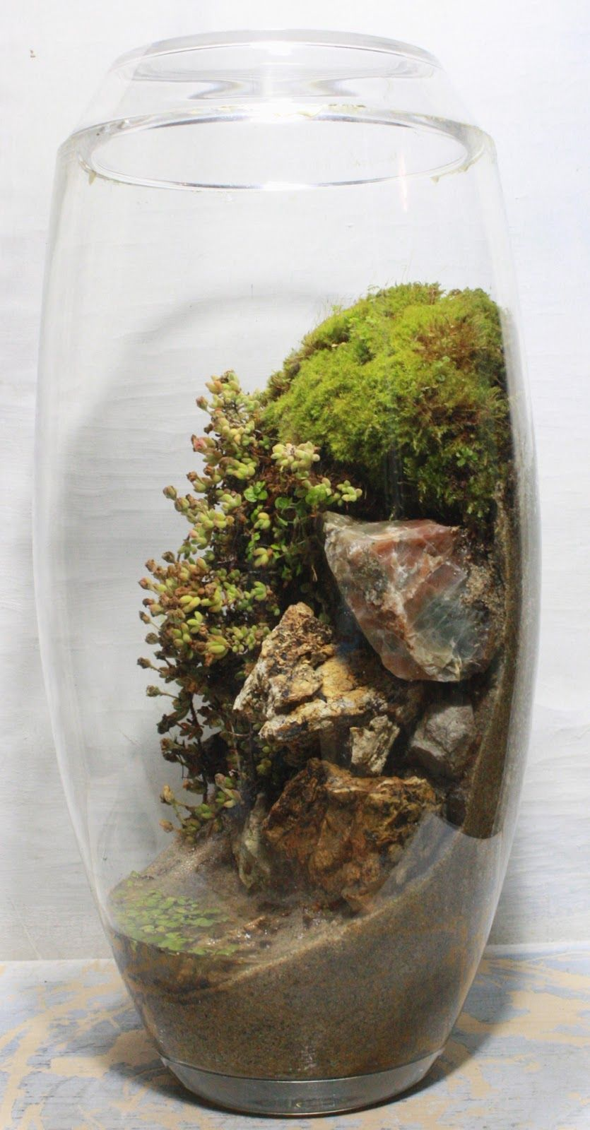 Planting A Terrarium Vertically To Create The Feel Of A