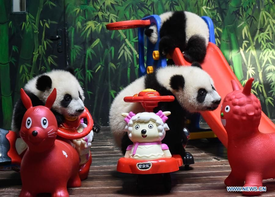Giant Panda Triplets Play With Toy Sheep At Park In Guangzhou Xinhua English News Cn Panda Bear Art Baby Animals Cute Animals