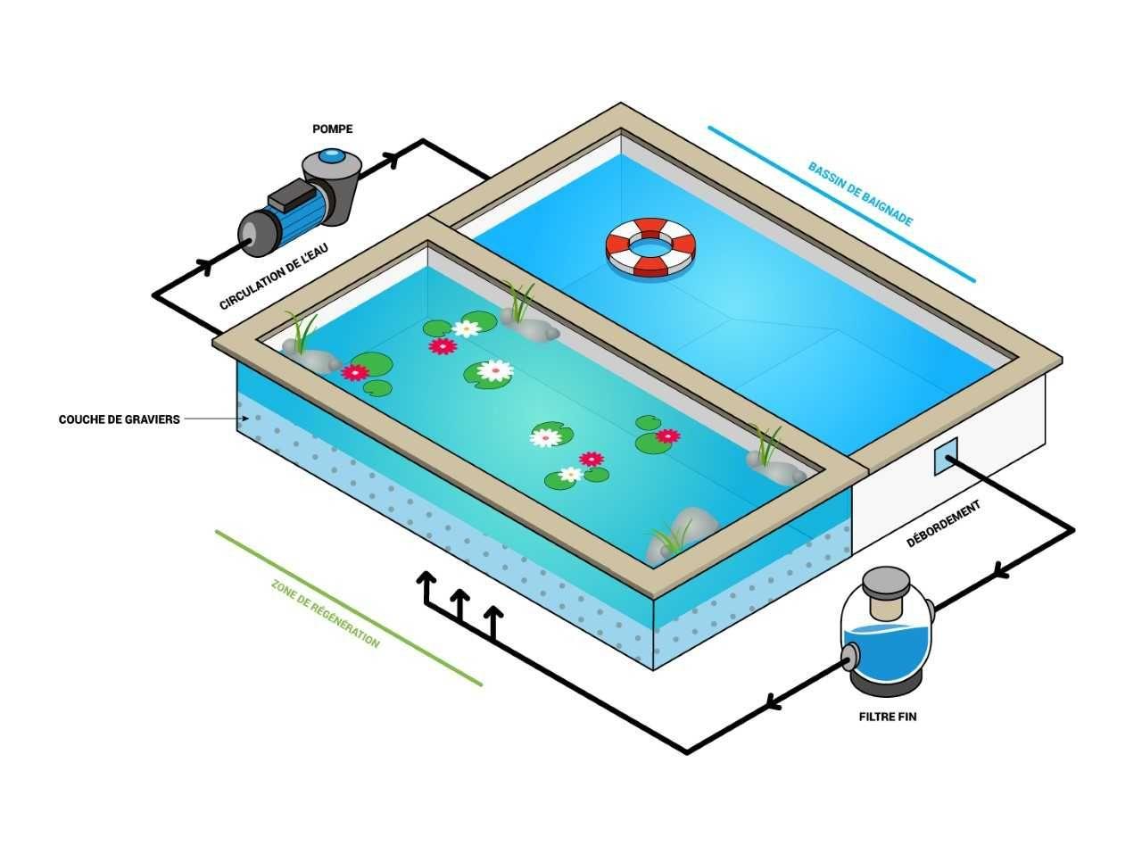 Bassin De Baignade Autoconstruction schéma du fonctionnement d'une piscine naturelle   plan