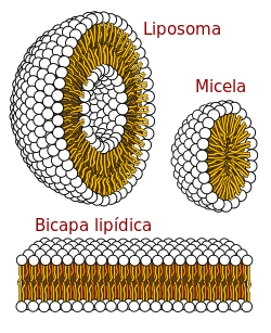 Lípido - Wikipedia, la enciclopedia libre - Bioquímica..