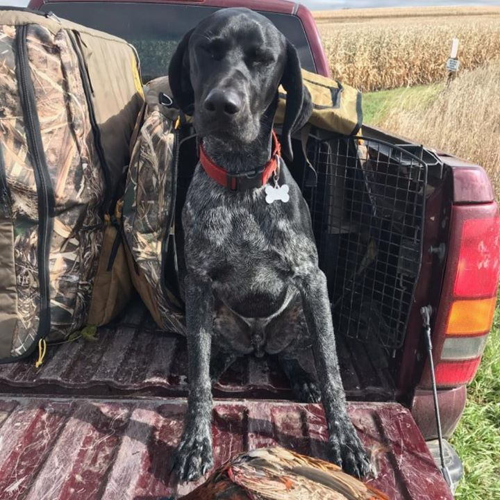 German Shorthaired Pointer Puppies Charlotte Nc References