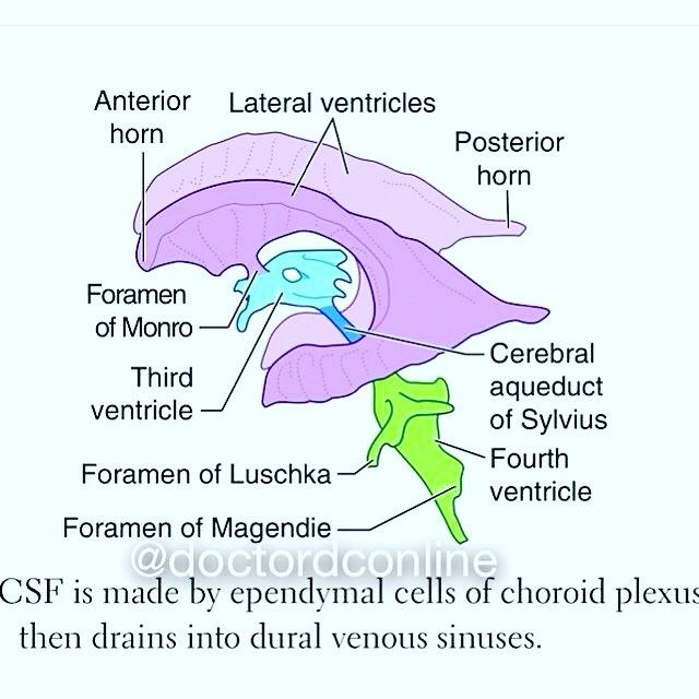 The ventricles of the brain are a communicating network of cavities the ventricles of the brain are a communicating network of cavities filled with cerebrospinal fluid ccuart Choice Image