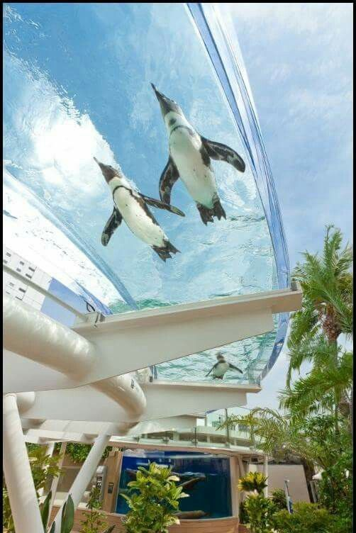 A water slide for penguins in Tokyo.