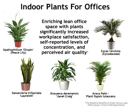 Indoor Plants For Offices Cbs Office Interiors Berkshire