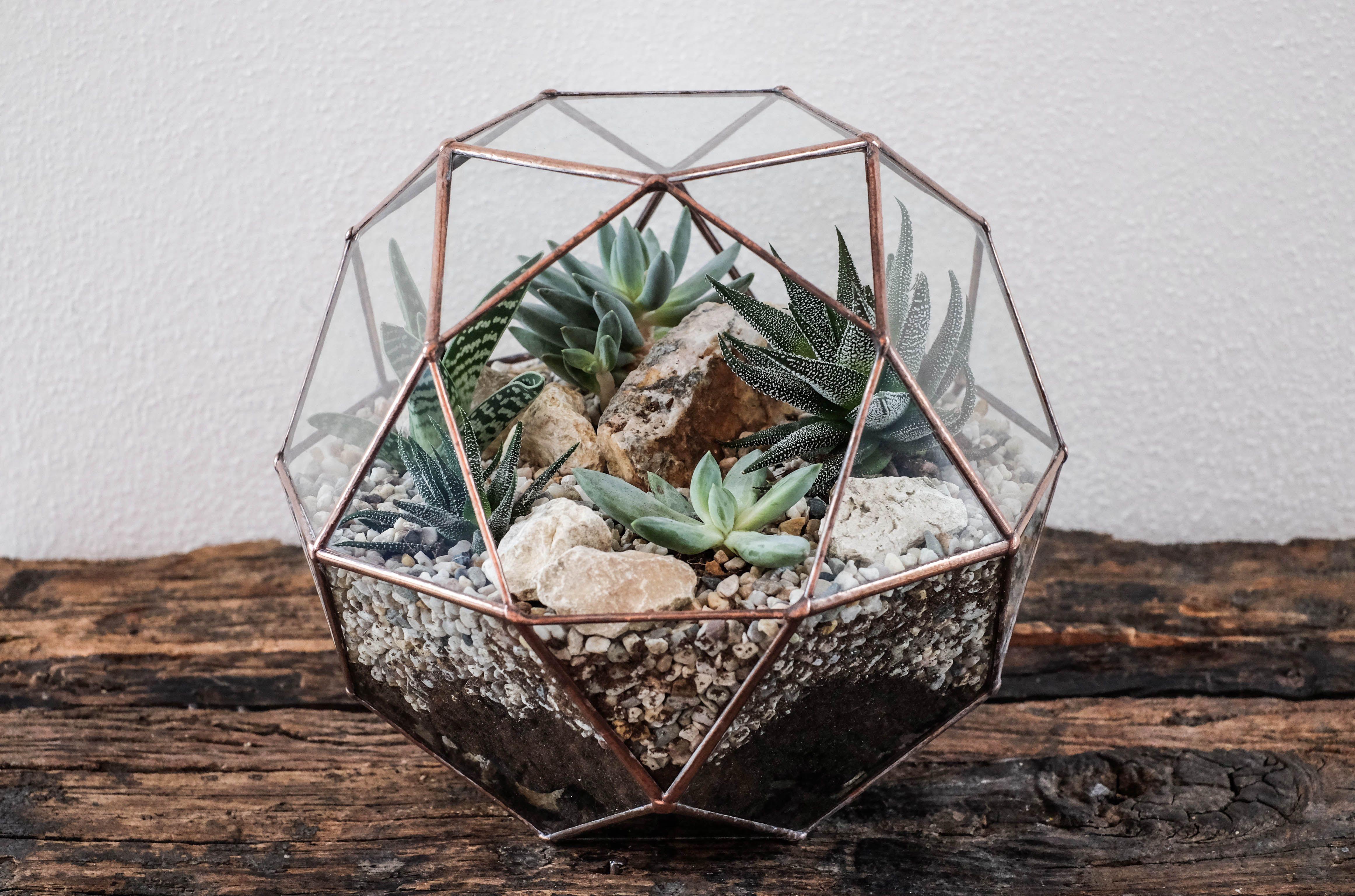 #Schoenedeko Mein Diy Terrarium Indoor Gardening Mit Anleitung