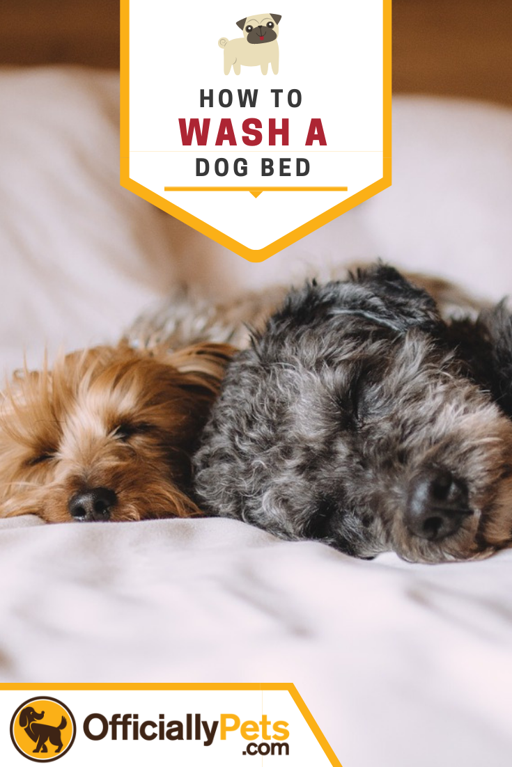 How to Wash a Dog Bed Get Rid of Smelly Dog Odors