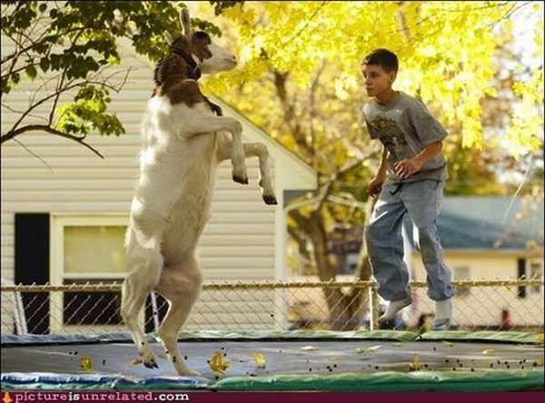 Goats just wanna have fun!  ... Uploaded with Pinterest Android app. Get it here: http://bit.ly/w38r4m