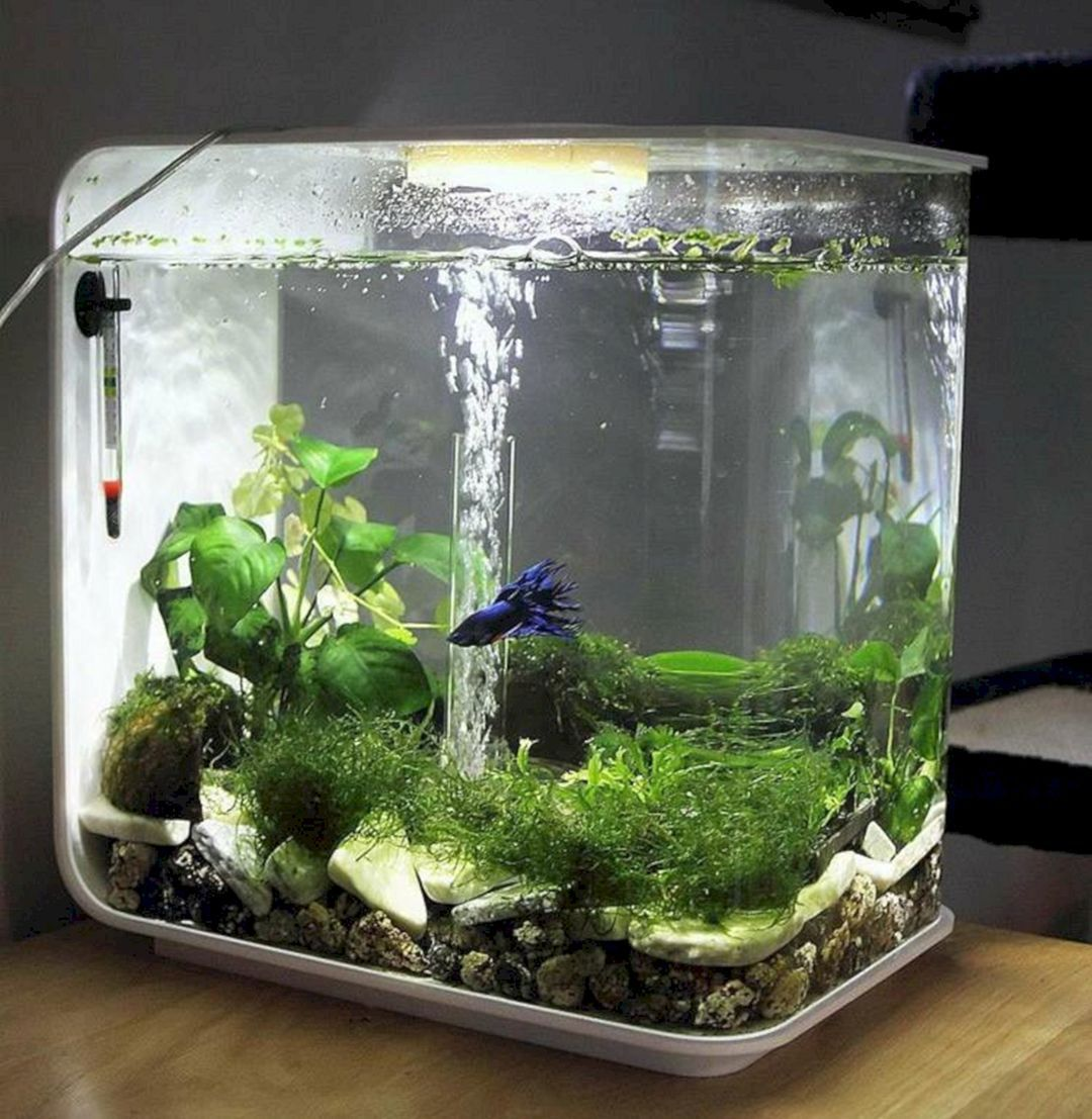 50 Beautiful Small Aquarium Ideas To Increase Your Home Beauty  # Aquarium Meuble Tv