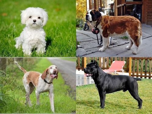 ��_坂絖腮筝∴Κ鴻21腟|ミックス犬,犬,動物