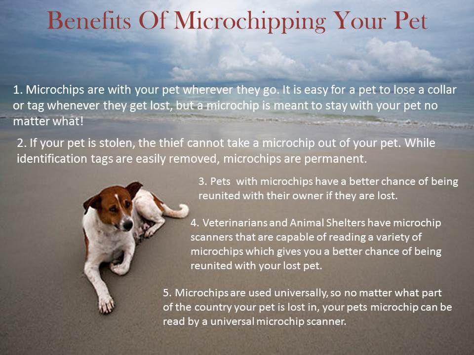 Benefits of Microchipping your pet. Pet 1, Vet clinics